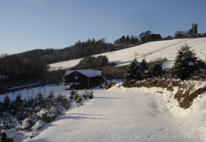 Visit our Tree Farm, between Chawleigh and Chulmleigh, Devon